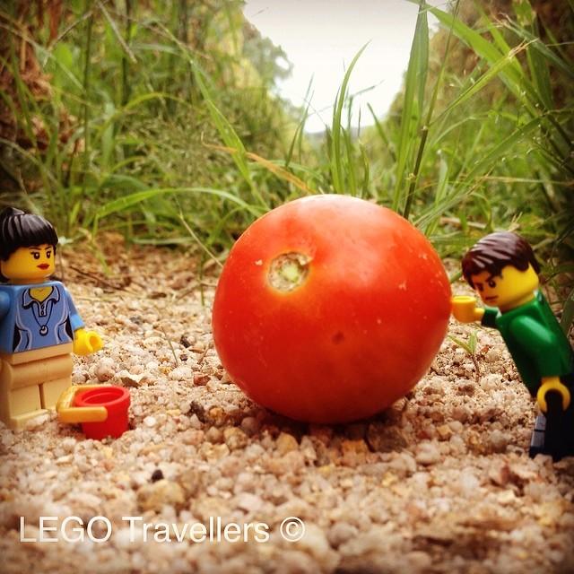 australia_tomato