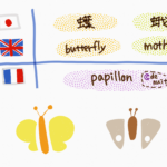 butterfly-moth-papillon