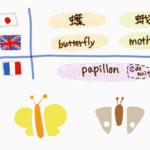 butterfly-moth-papillon